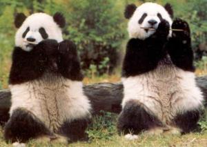 Le Panda est-il un socialiste qui s'ignore ?