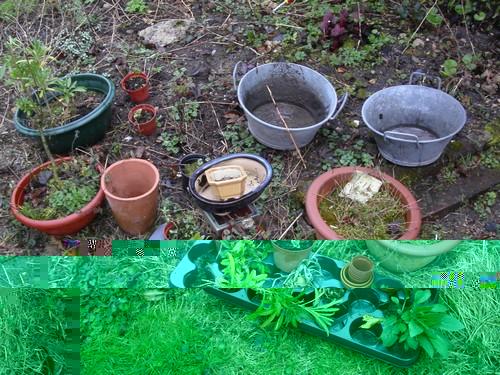 tresors-de-nos-jardins