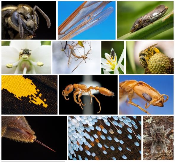 Photos d'insectes dans le domaine public